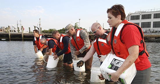 Norfolk District volunteers spread baby oysters on the new reef